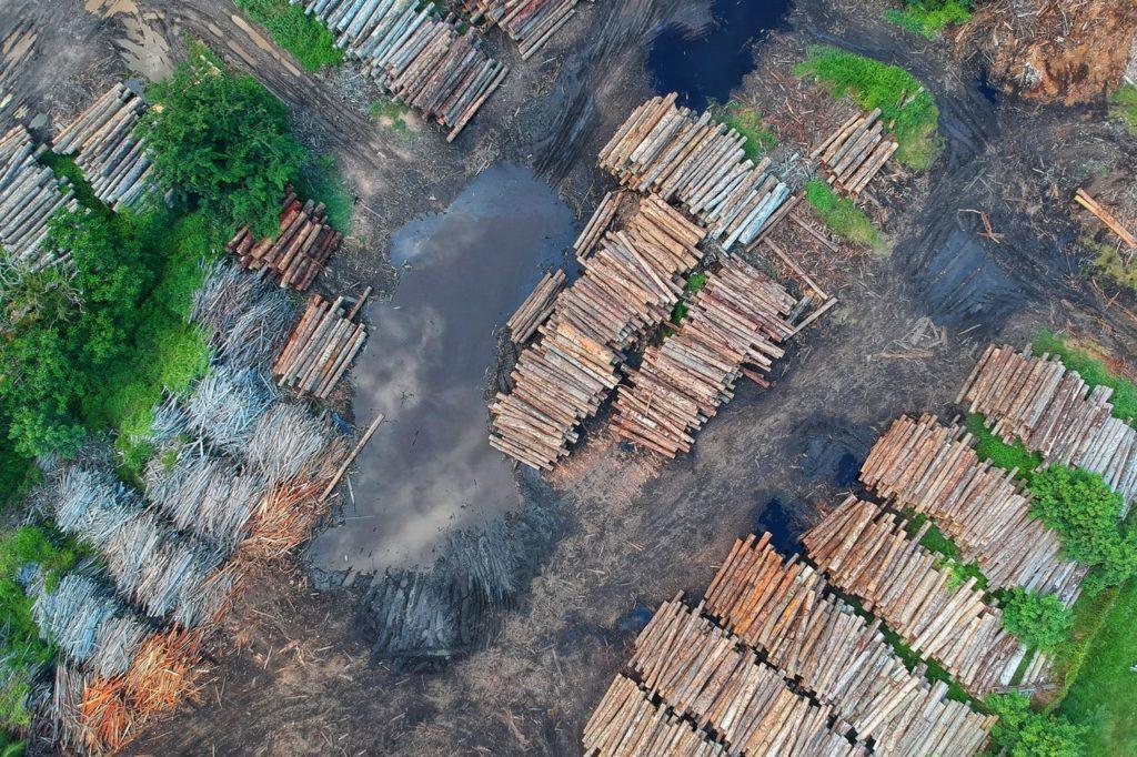 World Land Trust's nature reserves prevent more extreme deforestation