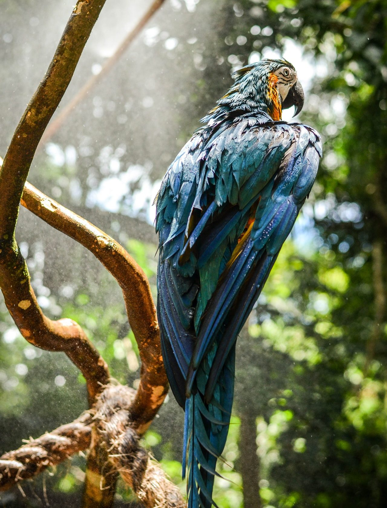 blue macaws live in World Land Trust nature reserves